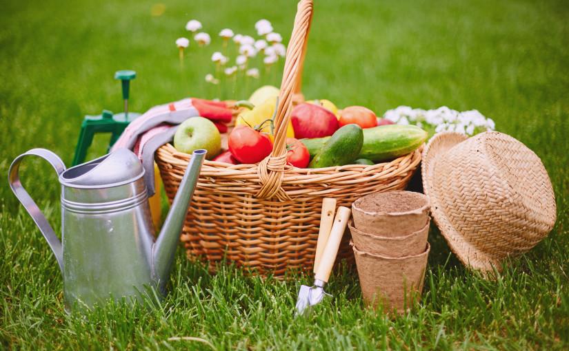 10 Zero Waste garden tips