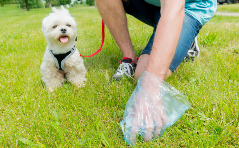 Dog mess: the nation's most hated & dangerous litter