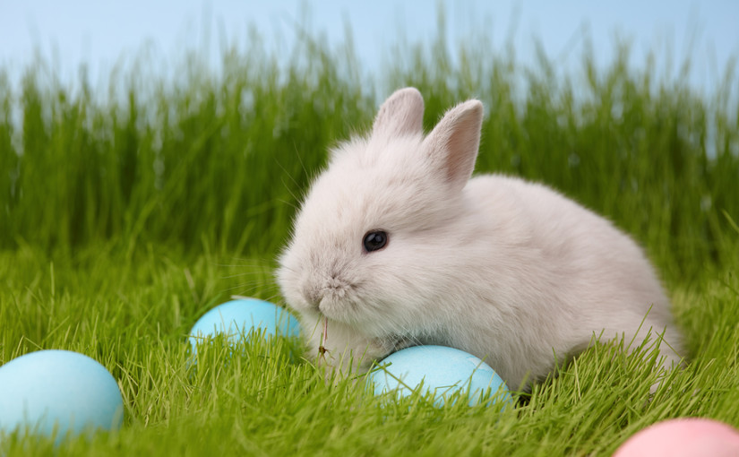 Tips for an eco-friendly Easter
