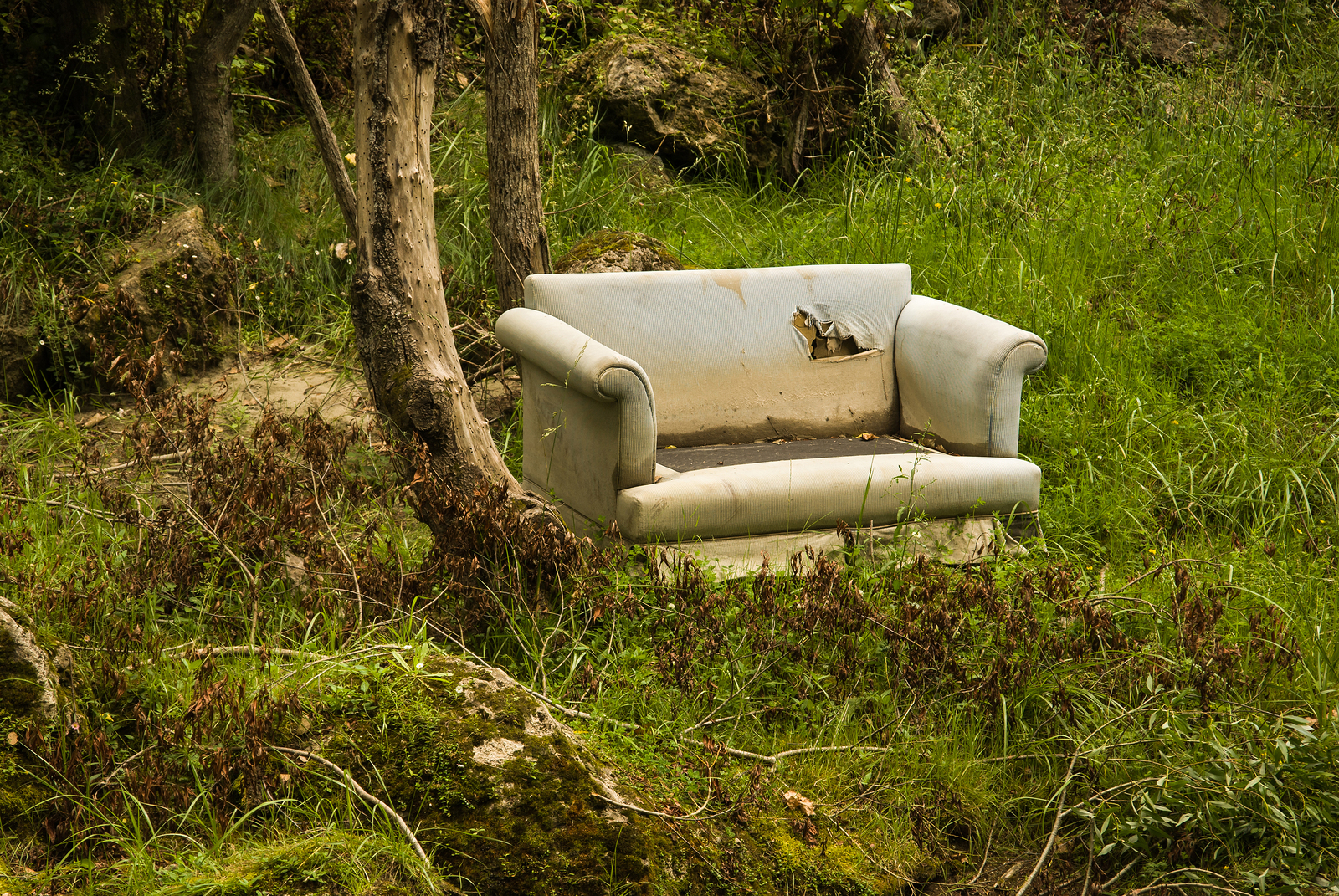 An illegally dumped sofa in the woods