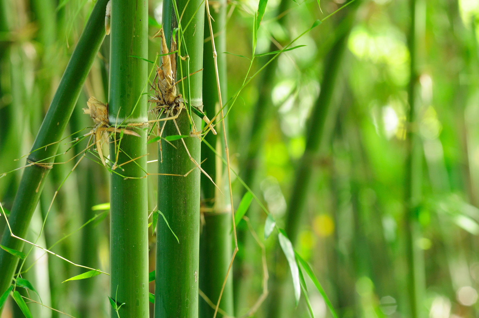 Global Green Bamboo Products Market Outlook – The Daily Chronicle