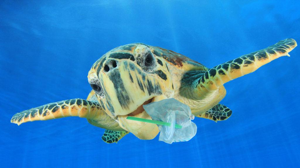 plastic harming turtle wildlife