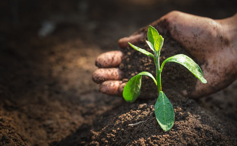 How to dispose of unwanted soil