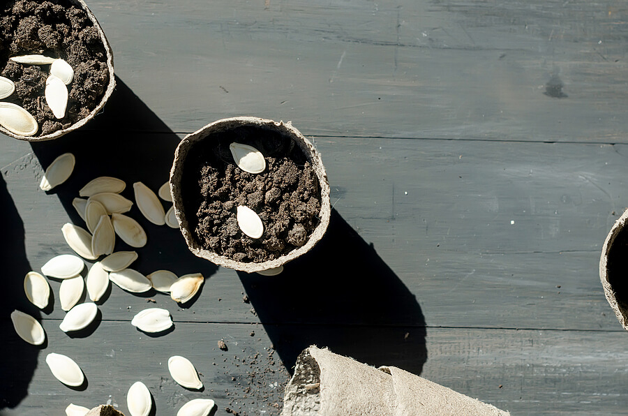 A plantpot with soil and seeds in.